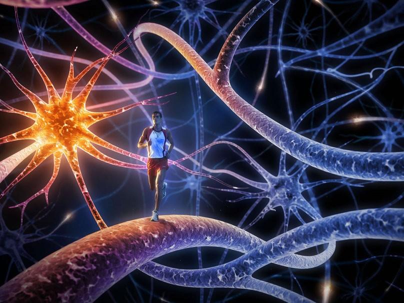 קישוריות עצבית מוגברת אצל רצים